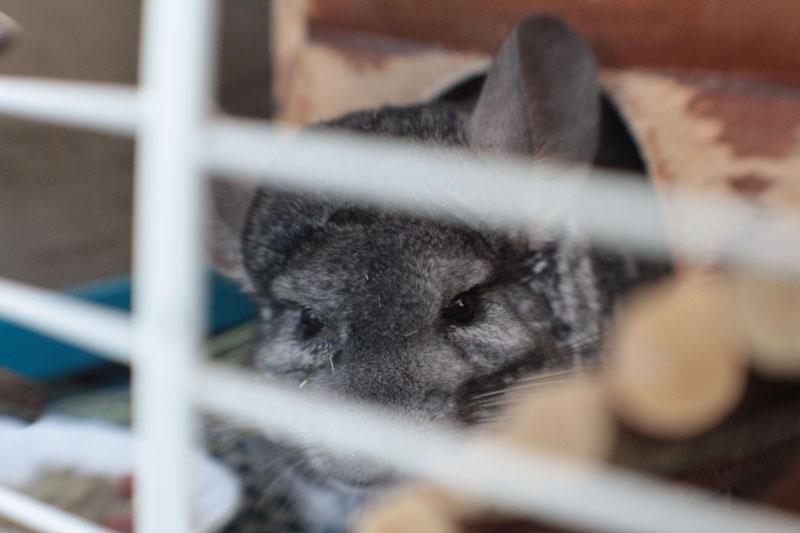 gary-through-cage