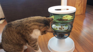 Our Favourite Cat Puzzle Feeders to Keep Your Cat Busy!