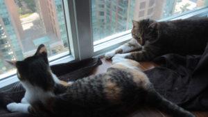 Kalista and Beau love their Cuddles! (Cat Photos & Betta Fish Photos)