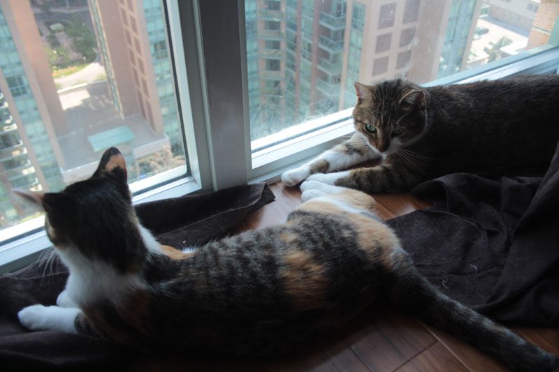 beau-and-kalista-by-window
