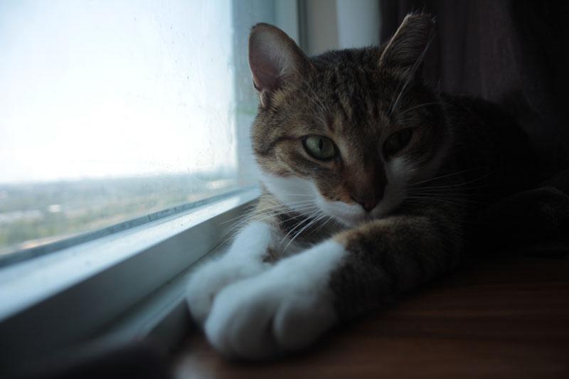 beau-sitting-by-window-2