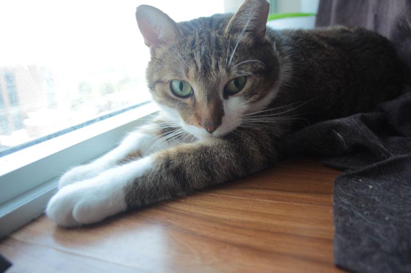 beau-sitting-by-window-3