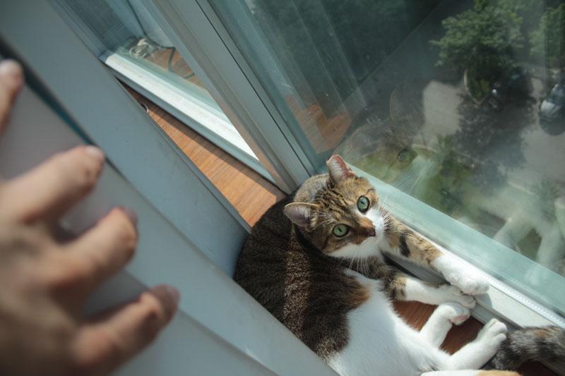 beau-by-window