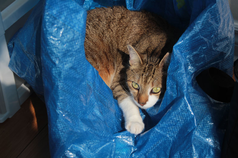 beau-in-ikea-bag
