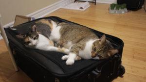 It's Back To Work Kitties! I'll Miss Ya!