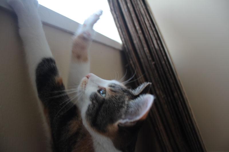 kalista-reaching-for-window