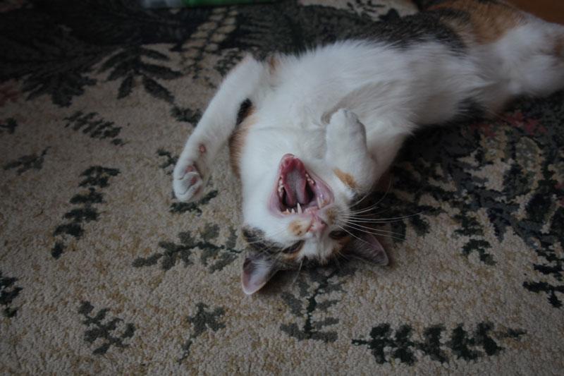 kalista-stretch-yawn-2