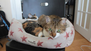Cats Are You Sleeping Together Again? (Cat, Chinchilla & Betta Fish Photos)