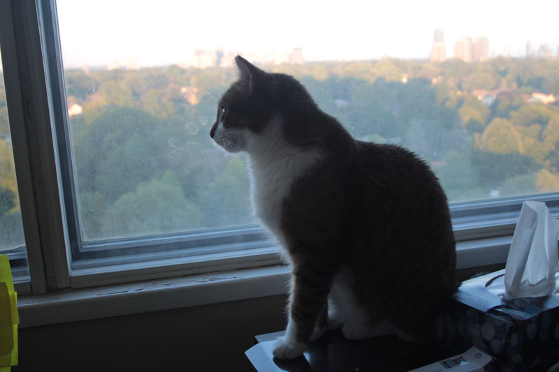 beau-sitting-by-window