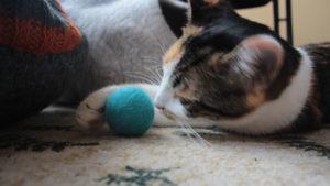 Kalista's Favourite Kitten Toys
