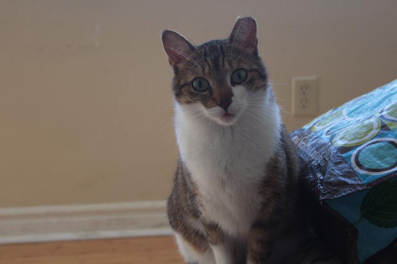 beau-staring-at-camera