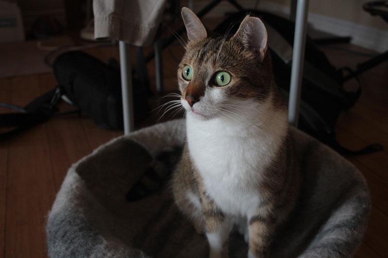 beau-staring-at-sun