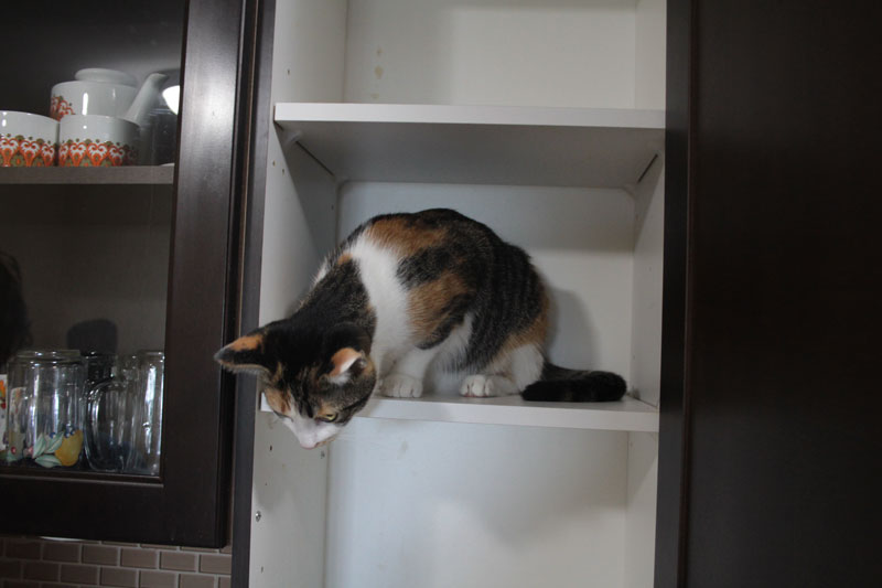 kalista-in-cupboard