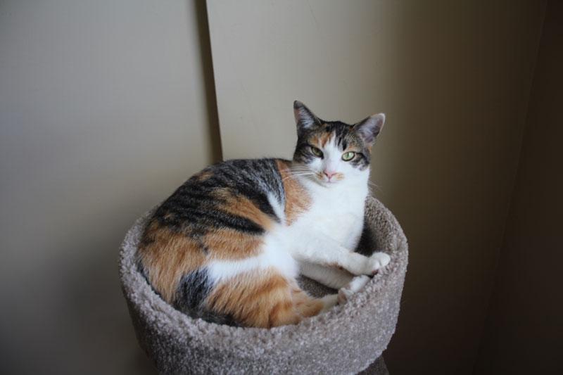 amazon-cat-tree-8