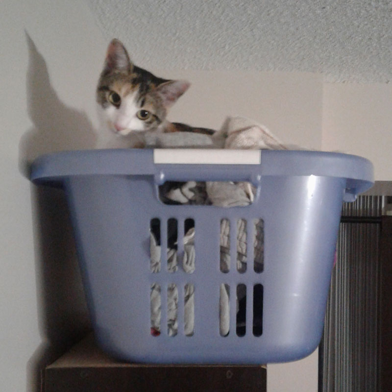 kalista-in-laundry
