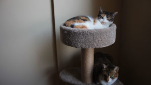 My Cats Have Started Fighting over the Cat Tree (Video)