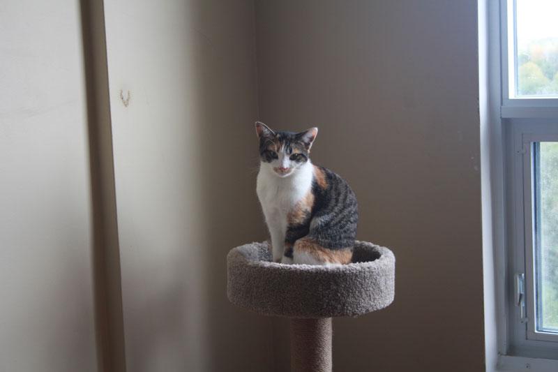 kalista-sitting-on-cat-tree