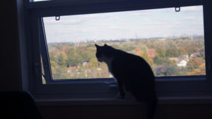 Beau is Really Learning to Love Our New Apartment (Cute Cat Story)