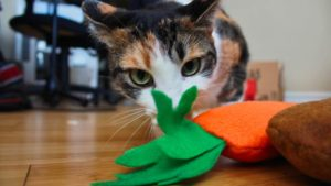 Top 6 Cat & Kitten Chew Toys to Promote Healthy Teeth