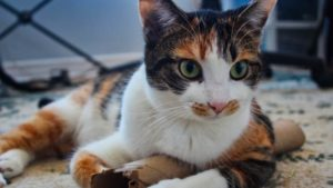 Kalista, My Cat, Loves Playing with Paper Towel Rolls (Cute Cat Story)