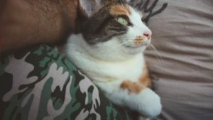 Taking Some Time Just to Be Grateful for My Pets (Cute Cat & Chinchilla Story with Pictures)