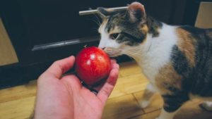 Can Cats Eat Apples? Are Apples Bad for Cats?