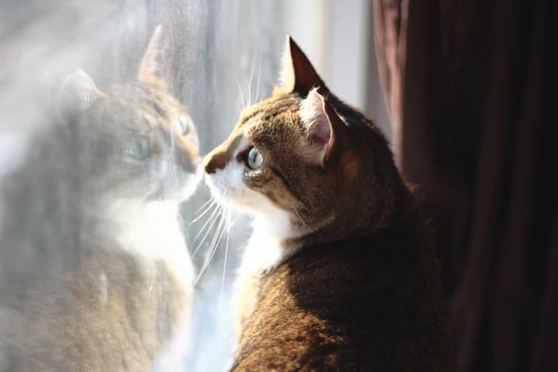 beau-looking-out-window
