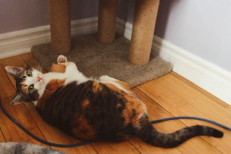 kalista-with-catnip-toy