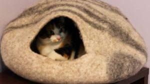 Kalista Has a New Favourite Place to Spend the Day (Cute Cat Story)