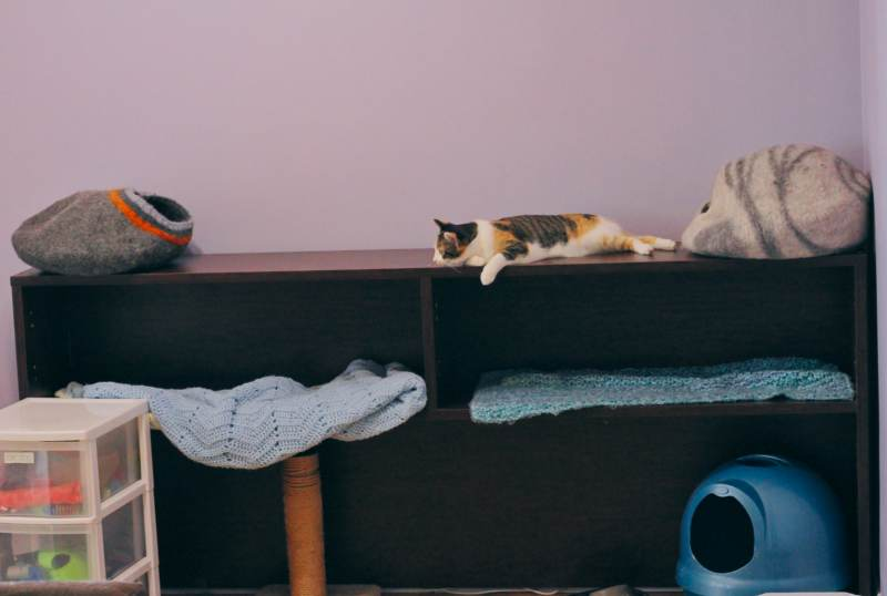 cat-hutch-kalista-sleeping-laying