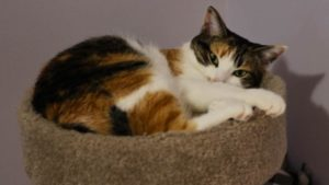 How Do Cats Mate? What Are the Stages and How Does a Queen Choose Her Mate?