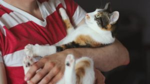 Do Cats Get Fevers? How to Diagnose & Treatments