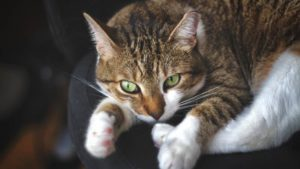 How to Stop Your Cat from Peeing on Your Bed & Reasons Why They Do It!
