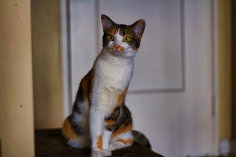 kalista-standing-on-futon-curious