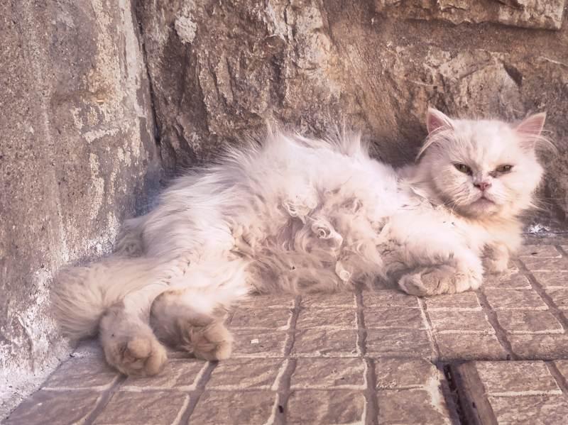 aramis-pregnant-lying-on-pavement