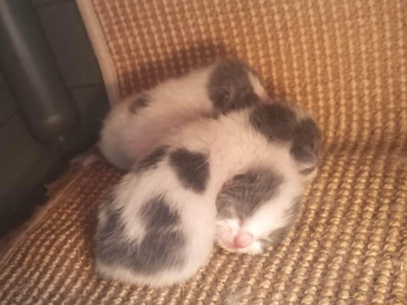 kittens-in-cat-house-three-aramis
