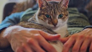Are Cats Autistic? Can Cats Have Autism?