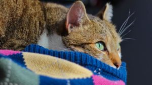 Why Do Cats Sleep with Their Eyes Open? Should I Be Worried?