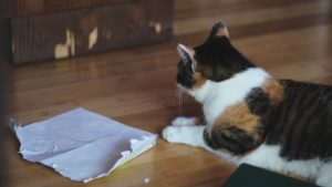 Why Does My Cat Tear up Paper? Ways to Get Your Cat to Stop